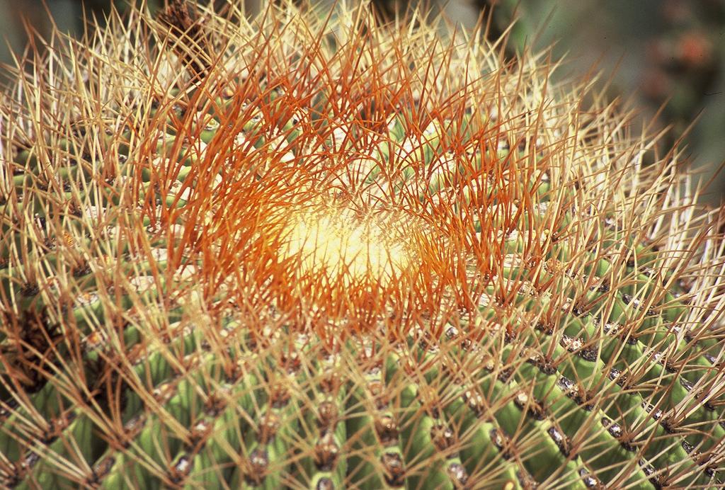 Outdoor Cactus
