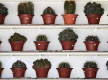 Cactus Care 101