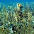Bahamas Coral Pillar