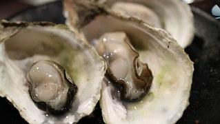 Shellfish_Oysters