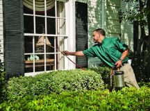 Steps to Control Pest in Home
