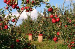 Gardening Tips For a Better Garden