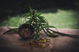 Top 5 Myths Used as Arguments Against Cannabis