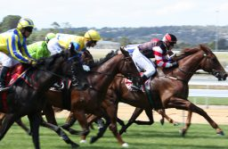 What Are The Different Types of Horse Races? A Guide for Beginners!