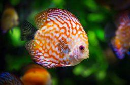 Aquarium Supplies – The Essentials And The Non-Essentials!